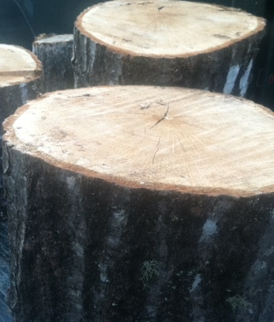 garden path logs