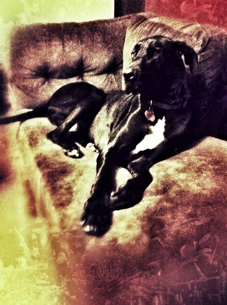 Centaur the Dog